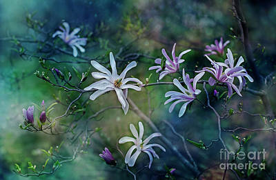 Photograph - Stellata Series 2/2 by Ezo Oneir