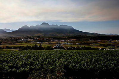Stellenbosch Vineyard Art Print by Dale Halbur