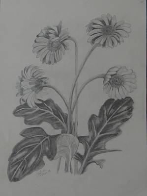 Gerbera Drawing - stems of gerbera from Rajbhavan Dehradun by Saloni Verma