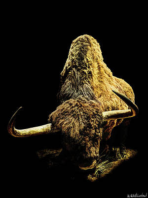 Photograph - Steppe Bison by Weston Westmoreland