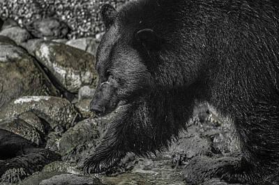 Stepping Into The Creek Black Bear Art Print