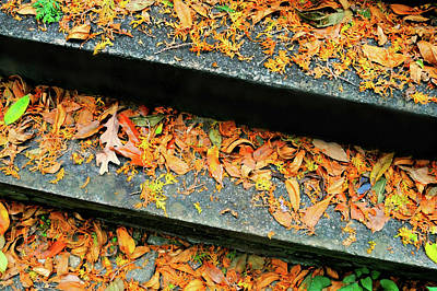 Photograph - Stepping On Fall by Diana Angstadt