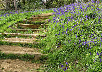 Photograph - Stepping Through The Bluebells  by Shirley Mitchell