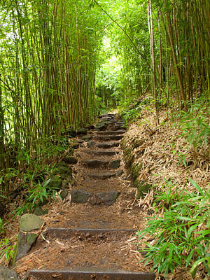 Bamboo Forest Photograph - Steps To The Bamboo Forest  by Phil Stone