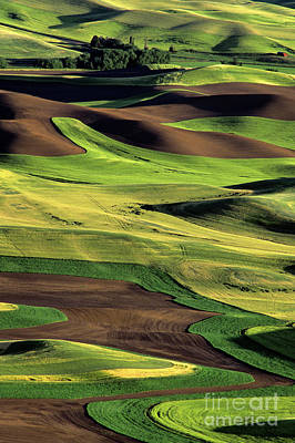 Photograph - Steptoe Butte Farmland by Jim Corwin