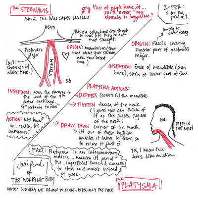 Drawing - Sternalis And Platysma by Julie Read