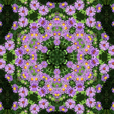 Photograph - Asters Kaleidoscope by Valerie Kirkwood