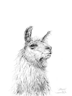 Llama Wall Art - Drawing - Steve by K Llamas