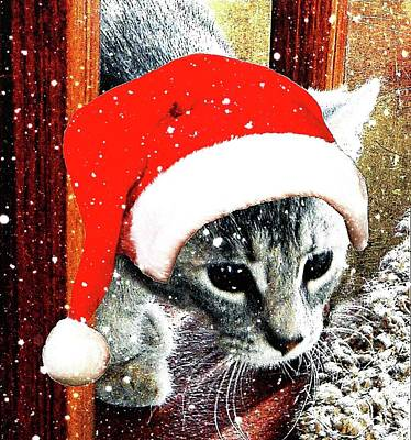 Photograph - Stevie Mouse Santa Impersonation by Dorothy Berry-Lound