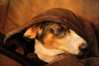 Dachshund Art Photograph - Stewie Under Cover by Theresa Campbell