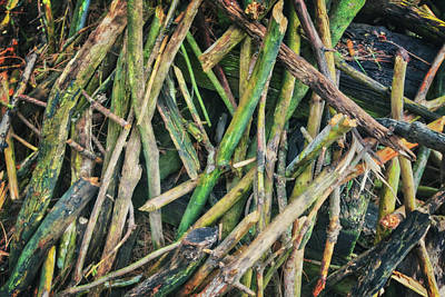Photograph - Stick Pile At Retzer Nature Center by Jennifer Rondinelli Reilly - Fine Art Photography