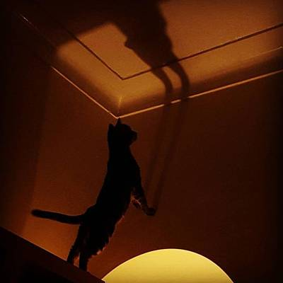 Photograph - #stiles Attacking His Own Shadow by Dante Harker