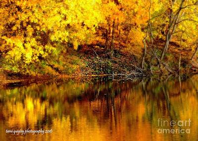 Photograph - Still Gold by Tami Quigley