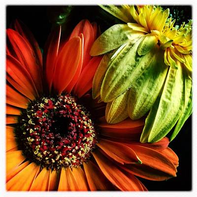 Photograph - Still Life by Anne Thurston