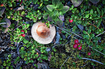 Still Life By Mother Nature Art Print by Cathy Mahnke