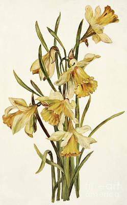 Daffodils Painting - Still Life, Daffodils by English School