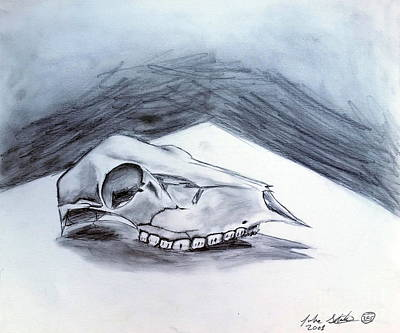 Drawing - Still Life Drawing Cow Skull 02 by Luke Galutia