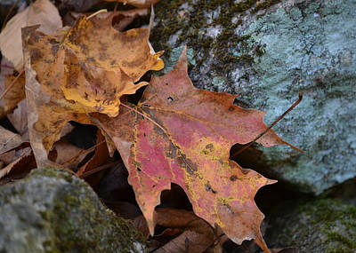 Photograph - Still Life Of Fallen Leaves by rd Erickson