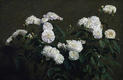 Painting - Still Life Of White Roses by Henri Fantin-Latour