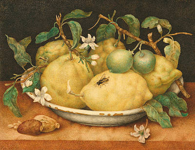 Still Life With A Bowl Of Citrons Art Print by Giovanna Garzoni