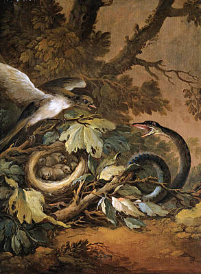 Viper Painting - Still Life With A Viper And A Bird's Nest by Circle of Christoph Ludwig Agricola