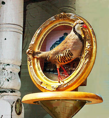 Photograph - Still Life With Bird by Susan Vineyard