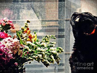 Photograph - Still Life With Sheba 3 by Sarah Loft