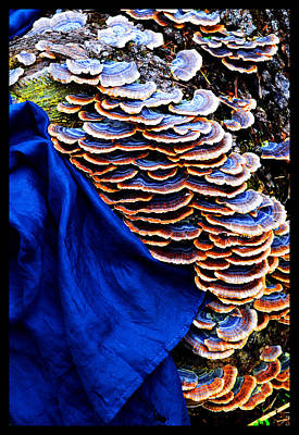 Photograph - Still Life With Silk And Bracket Fungi by Susanne Still