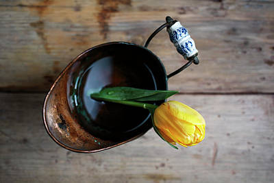 Coppers Photograph - Still Life With Tulip by Nailia Schwarz
