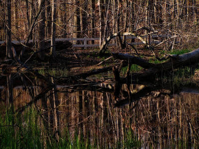 Photograph - Still Pond by Scott Hovind