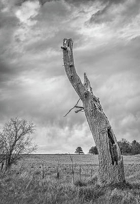 Photograph - Still Standing 2017 by Thomas Young