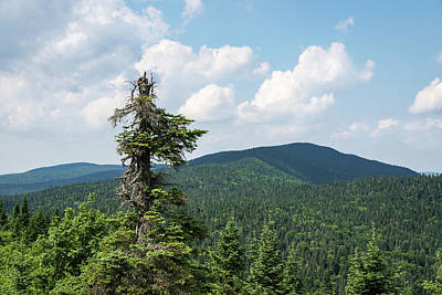 Photograph - Still Standing - One Mighty Pine Tree In The Mountains by Georgia Mizuleva