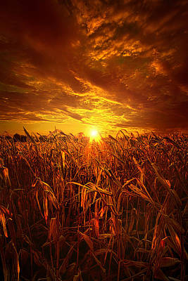 Photograph - Still Standing by Phil Koch