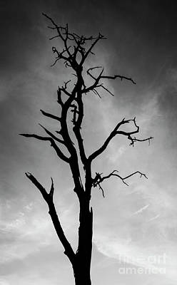 Photograph - Still Standing by Scott Kemper