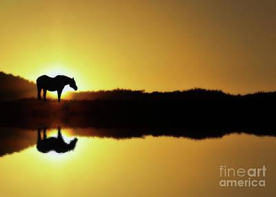 Horse Photograph - Still Sunrise by Stephanie Laird