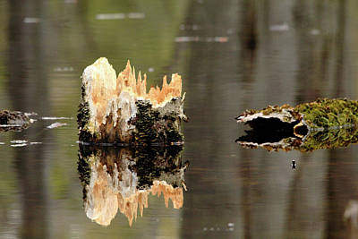 Photograph - Still Water by Debbie Oppermann