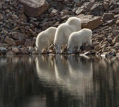 Photograph - Still Water by Kent Keller