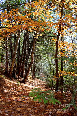 Photograph - Stillness by Elfriede Fulda