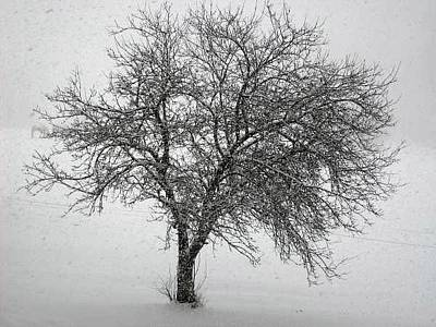 Photograph - Stillness In The Storm by Jennifer Compton