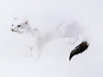 Painting - Stoat Watercolor by Attila Meszlenyi