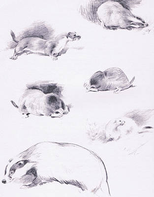 Weasel Drawing - Stoat, Weasel, Badger And Mole by Archibald Thorburn