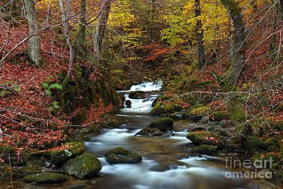 Ambleside Wall Art - Photograph - Stockghyll Force 2 From The Footbridge by Richard Thomas