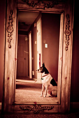 Rat Terrier Photograph - Stoic by Andrew Kubica