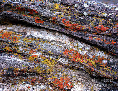 Photograph - Stone And Lichen by Natalie Dowty