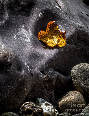 Gunmetal Photograph - Stone And Orange Leaf by James Aiken