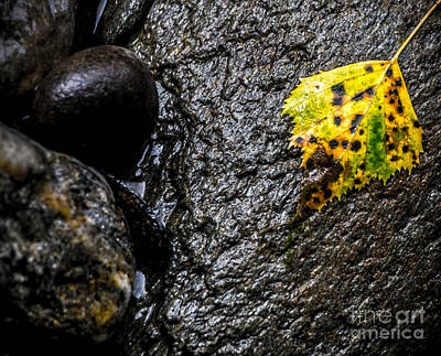 Gunmetal Photograph - Stone And Yellow Leaf by James Aiken
