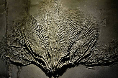Photograph - Stone Coral by Nadalyn Larsen