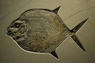Photograph - Stone Fish by Nadalyn Larsen