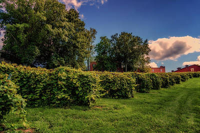 Photograph - Stone Hill Vineyard Mo_7r2_dsc0280_16-08-18 by Greg Kluempers