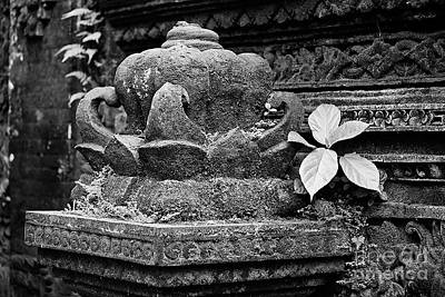 Photograph - Stone Lotus by Craig Lovell